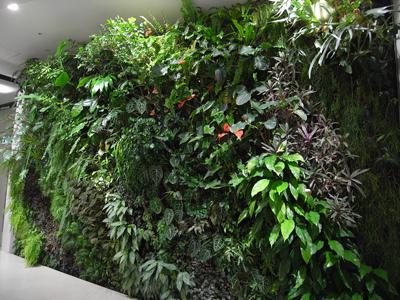関西初!壁面緑化の住宅が誕生します! (エコハウス 西宮)